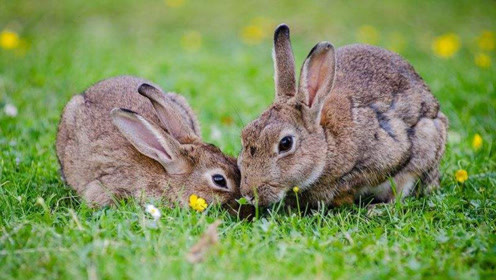 史上最伟大的兔子妈妈,看完我再也控制不住了
