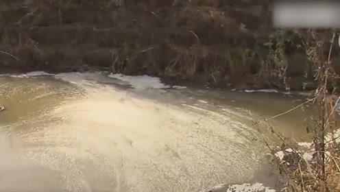 韩国河流被因猪瘟大量屠杀的猪血污染 总理表道歉