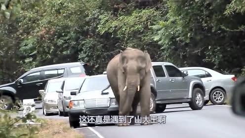 """象哥你是闲着有多无聊,竟然拦路""""抢劫"""",看把司机都吓跑了"""