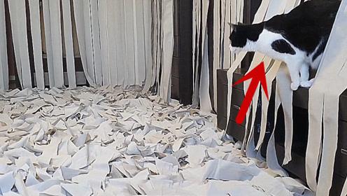 小伙在房间放满卫生纸,猫咪看到后会怎样?看完忍住别笑!