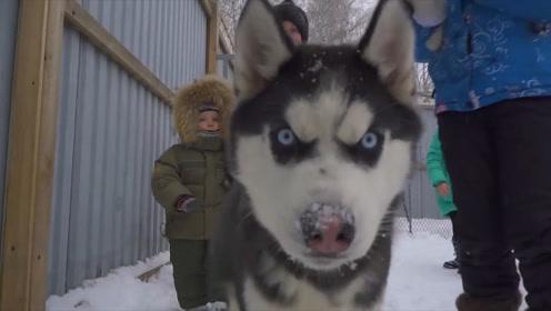 当哈士奇看到北极熊,北极熊:你别动,二哈:我不动