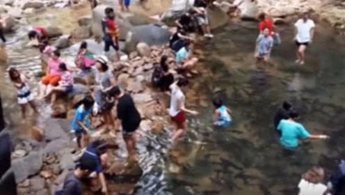 泰国瀑布黑鱼泛滥成灾,形成了罕见鱼漂瀑布,当地人却无人敢吃