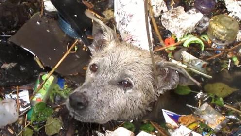 狗狗被扔进臭水沟10天无人问津,救援人员赶到时,狗狗都快饿死了