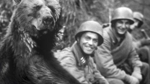 """史上唯一当过兵的熊,获得过军衔也""""出征""""过,任务只是搬运炮弹"""