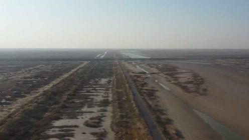 无人机航拍黄河三角洲,广袤的盐碱地一望无际,天空飞过一群鸟