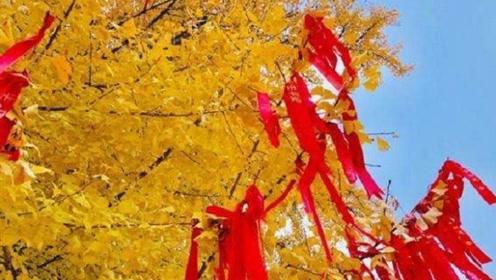 当年李世民亲手种下的一棵树,如今1400年过去了,看完惊艳了