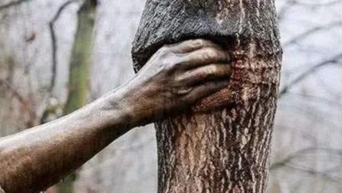 世界上最孤独的手,握着一棵树50年没有松开过,观众:看完心里真不是滋味