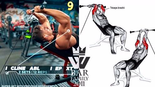 健美秘籍:十六项大臂的训练