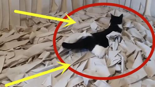 有钱就是任性,男子把猫咪放进铺满卫生纸的房间,猫咪瞬间懵了!