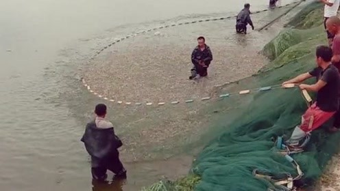 为什么虾能跳的如此整齐,我总怀疑有个虾指挥,在水下给这些虾米下命令!