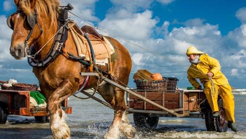 骑马在海中钓虾700年,一天捕捞300斤!网友:这才是真正的宝马