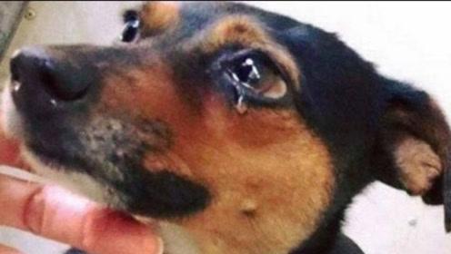 一小勺就能够杀死一条狗?它对人类无害,对狗狗来说却是致命灾难!