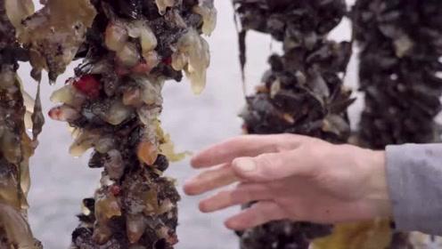 带你去赶海,享受从海湾到餐桌的新鲜。淡水海水交融带来口感独特的贝肉