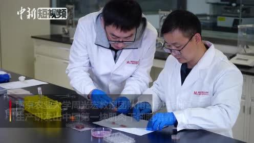 """中国第一块""""细胞培养肉""""长这样"""