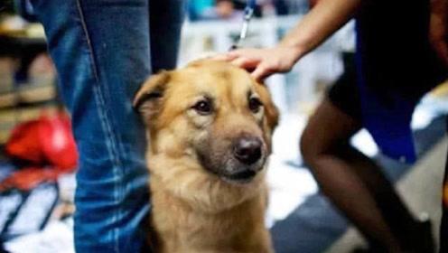 """人们总爱""""摸狗头"""",那么你知道,在狗狗心里这意味着什么吗?"""