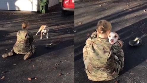 狗狗遇上分离多年主人 愣了好几圈才反应过来:原来是你呀!