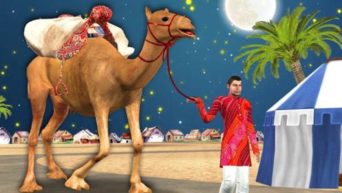 男孩带骆驼出门,夜晚露营睡着时,竟被骆驼一脚踢出帐篷!