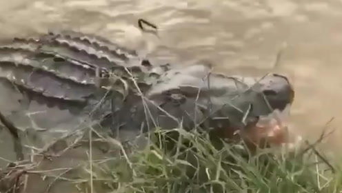 潮州一湿地公园有鳄鱼出没?背后真相令人哭笑不得