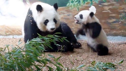 熊团子闹情绪跟妈妈打闹,妈妈的一个举动,瞬间让它认怂