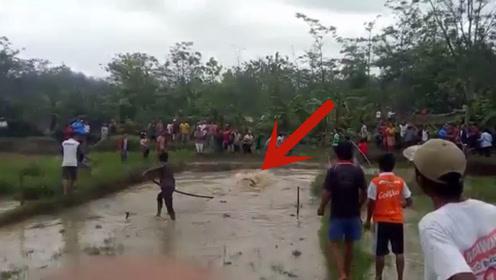 男子正在稻田劳作,结果一头猛兽冲了出来,镜头拍下全过程!