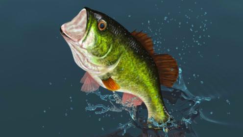 猪肉太贵改吃鱼?3种鱼对健康有危害尽量别吃