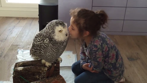 小女孩偷偷亲吻猫头鹰,下一秒猫头鹰的反应太暖了,镜头记录全过程