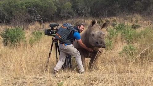 大叔野外摄影,巧遇犀牛出来觅食,镜头记录友爱画面