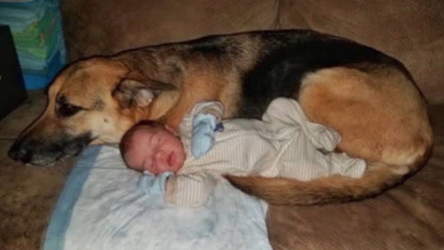 狼狗半夜偷偷潜入婴儿房,母亲调查监控后,瞬间泪崩!