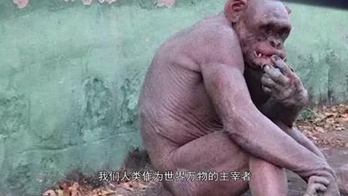 为何大猩猩几乎不做大量训练,肌肉也很发达?