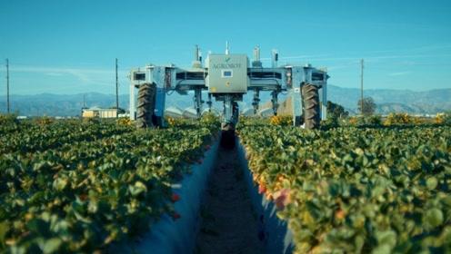 老外发明摘草莓机器人,可自动识别熟草莓,草莓控看美了