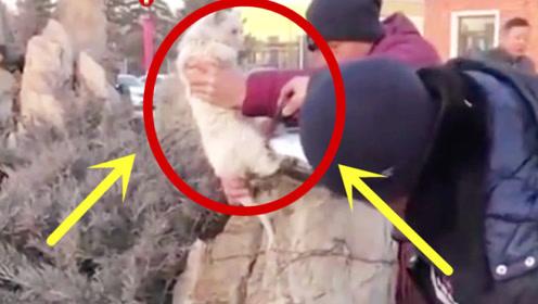 来自东北的猫咪,上个厕所的功夫,身子冻在石头上!
