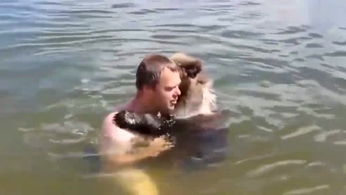 小伙的这个举动可把棕熊吓坏了,这家伙立马像个无尾熊一样挂在小伙身上