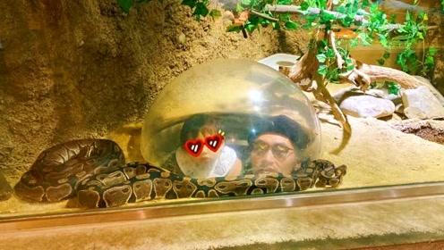 张歆艺一家逛动物园 四坨被袁弘抱着看蟒蛇表情淡定