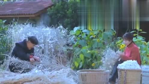 李子柒:大家看我养的蚕宝宝,是不是特别可爱呀