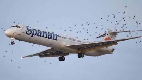 飞机飞行中撞到鸟,后果到底有多严重?看完你害怕了吗?
