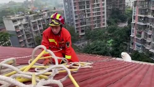 """太不省心!萨摩耶爬上7楼屋顶""""看风景""""被困 惊动119!"""