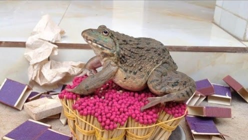 外国小哥在火柴堆上烤青蛙吃,真的可以烤熟吗?网友:资源一点没浪费