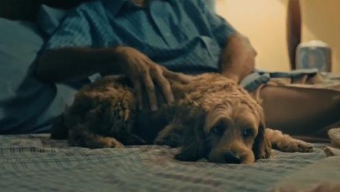 老人养的狗去世后,原本想将其埋葬,没想到却意外获得数十万的遗产!