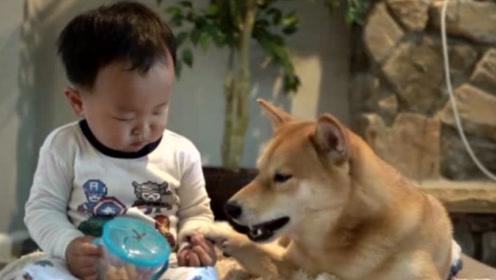 趁爸妈不在,小主人给狗狗疯狂加餐,两个小伙伴感情也太好了