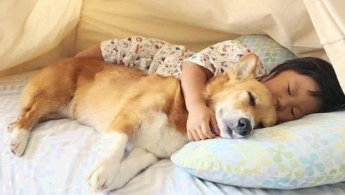 为什么狗狗总喜欢到主人床边睡觉,其实原因很简单,你都明白吗?