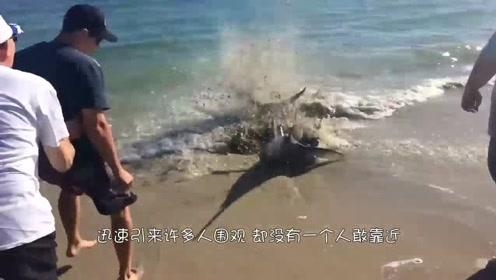 海边的这条鱼像疯了一样,没人敢靠近,它到底怎么了?