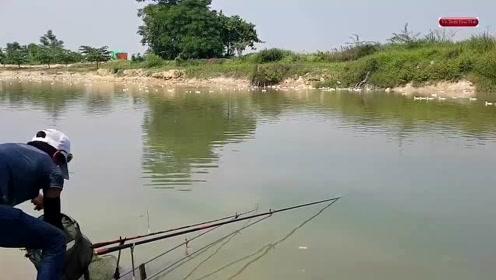 鱼塘边小伙撒下钓竿一边看着鸭子一边钓鱼真是会享受,野货就是多