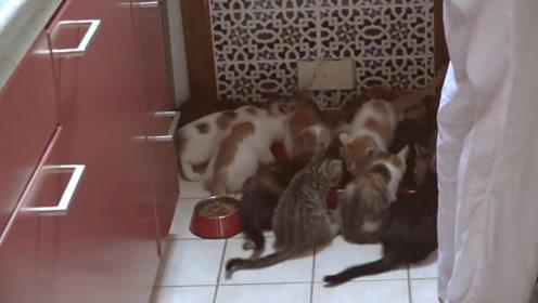 """家里养了十多只猫,集体抱着主人小腿不放,这是一群""""猫精""""吧"""