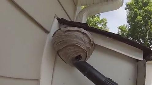 为了除掉马蜂窝,小伙用上了吸尘器,镜头记录全过程