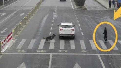 轿车未礼让过路黑狗被罚?交警辟谣:恶意裁剪,右边有行人