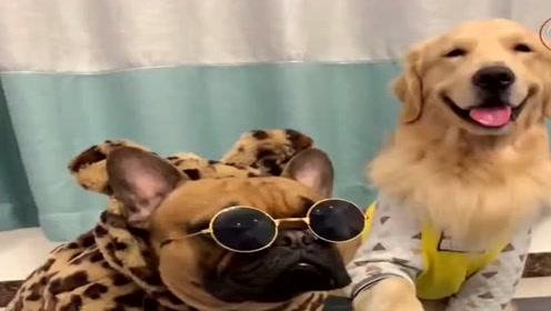 主人一家商量要三胎,看狗狗说了什么令他们改变了主意,太逗了!