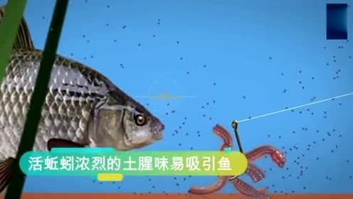 钓鱼新技巧,用蚯蚓钓大鱼的挂钩方法,网友:上鱼效果非常的好!