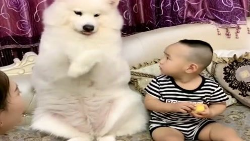 狗狗帮小主人跟妈妈要东西吃,它的反应令人感动,懂事的狗狗!