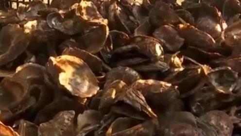 不只是美食 还能拯救纽约港?牡蛎壳到底能干啥?