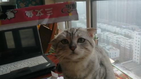 小猫馋嘴起来hold不住,居然开始吃空气了,猫:我饿呀
